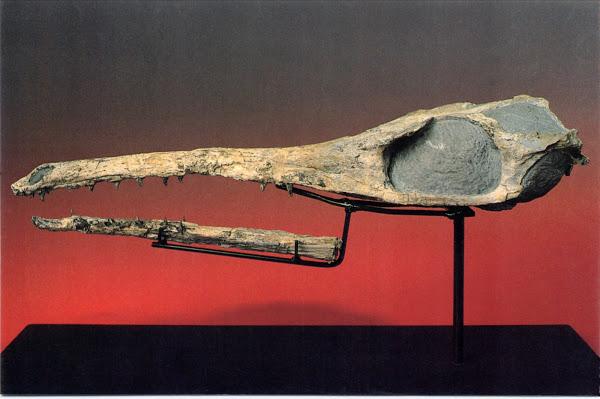 """Maledictosuchus riclaensis. """"El cocodrilo de Ricla"""""""